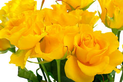 Belle rose gialle Immagine Stock
