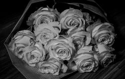 Belle rose rosa fresche fotografia stock libera da diritti