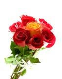 Belle rose rosse Immagini Stock