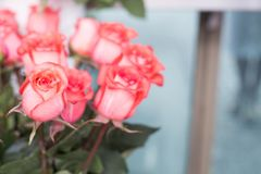 Belle rose rosse bouquet Fotografie Stock