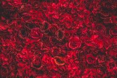 Belle rose rosse Parete del fiore Primo piano delle rose rosse enormi Posto per testo immagine stock