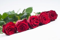 Belle rose rosse sistemate in una fila Immagine Stock