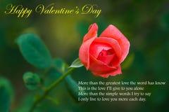 Belle Rose rouge Photos libres de droits