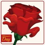 Belle Rose rouge pour le jour des femmes, illustration de vecteur Photo libre de droits
