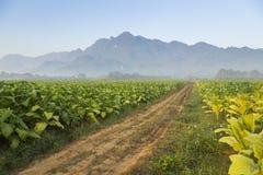 Belle route dans les domaines de tabac avec la montagne photo libre de droits