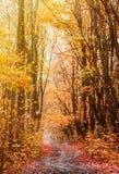 Belle route incurvée dans le paysage vibrant de forêt d'automne images stock