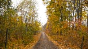 Belle route pendant l'automne d'or de forêt Lames de jaune tir lent Appareil-photo subjectif Appareil-photo dans le mouvement HD banque de vidéos