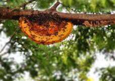 Belle ruche d'abeille nouvellement construit par des abeilles de travailleur Photos stock