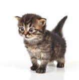 Belle séance mignonne de chaton de 20 jours Photo stock