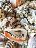 Belle sélection des coquilles peu communes de bord de la mer Image stock
