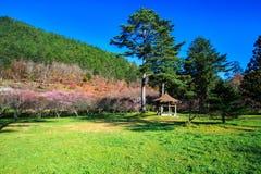 Belle Sakura Garden dans la ferme Taïwan de Wuling image libre de droits
