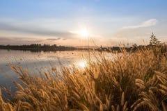 Belle scène avec onduler l'herbe sauvage sur un coucher du soleil image stock