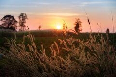 Belle scène avec onduler l'herbe sauvage sur un coucher du soleil photos libres de droits