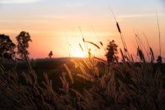 Belle scène avec onduler l'herbe sauvage sur un coucher du soleil image libre de droits