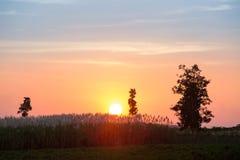 Belle scène avec onduler l'herbe sauvage sur un coucher du soleil images libres de droits
