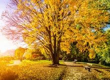 Belle scène d'automne en parc au lever de soleil Photographie stock