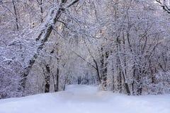 Belle scène d'hiver avec la gelée après des chutes de neige image libre de droits