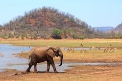 Belle scène d'une position d'éléphant sur le bord des eaux du Lac Kariba avec un fond et un impala montagneux photographie stock