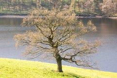 belle scène de lac Images libres de droits