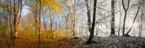 Belle scène de matin dans la forêt, saison changeante de panorama Photo stock