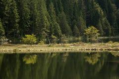 Belle scène de paysage chez le petit Arbersee en Bavière images libres de droits