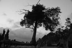 Belle scène de rivière en noir et blanc Photo stock