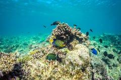Belle scène sous-marine avec l'espèce marine au soleil en mer bleue Paradis sous-marin des Maldives Images stock