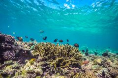 Belle scène sous-marine avec l'espèce marine au soleil en mer bleue Paradis sous-marin des Maldives Photographie stock libre de droits