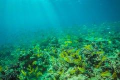 Belle scène sous-marine avec l'espèce marine au soleil en mer bleue Paradis sous-marin des Maldives Photo stock