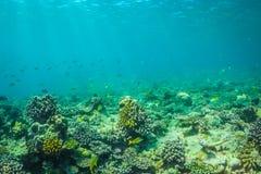 Belle scène sous-marine avec l'espèce marine au soleil en mer bleue Paradis sous-marin des Maldives Image libre de droits