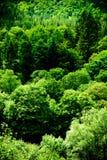 Belle scène verte de forêt Photographie stock libre de droits
