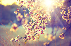 Belle scène de nature avec l'arbre de floraison Image libre de droits