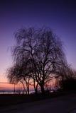 Belle silhouette d'un arbre Images stock
