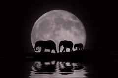 Belle silhouette des éléphants africains à la lever de la lune photographie stock libre de droits