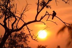 Belle soirée dans le désert Bikaner de thar Photos stock