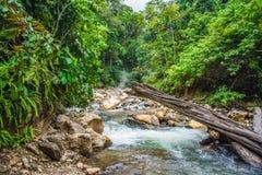 Belle sorgenti di acqua calda nella giungla Fotografie Stock