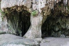 Belle stalagmite Fotografie Stock