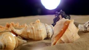 Belle stelle marine dello shellsand del mare sulla sabbia della spiaggia video d archivio