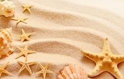 Belle stelle marine su un fondo della sabbia fotografia stock libera da diritti