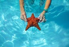Belle stelle marine variopinte in mani della ragazza Fotografie Stock Libere da Diritti