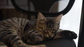 Belle Tabby Cat dort sur la chaise banque de vidéos