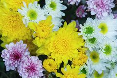Belle tache floue de fleurs de bouquet photos libres de droits