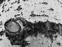 Belle texture d'écorce d'arbre avec de la mousse et le moule photographie stock