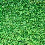 Belle texture d'herbe verte Image stock