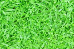Belle texture d'herbe verte Photos stock