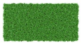 Belle texture de fond d'herbe verte Images libres de droits