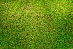 Belle texture de mousse verte images stock