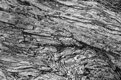 Belle texture en bois images stock