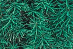 Belle texture florale verte de fond image libre de droits