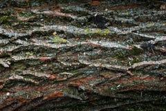 Belle texture naturelle de l'utilisation du bois de planche d'écorce comme texturisé en bois de nature images libres de droits